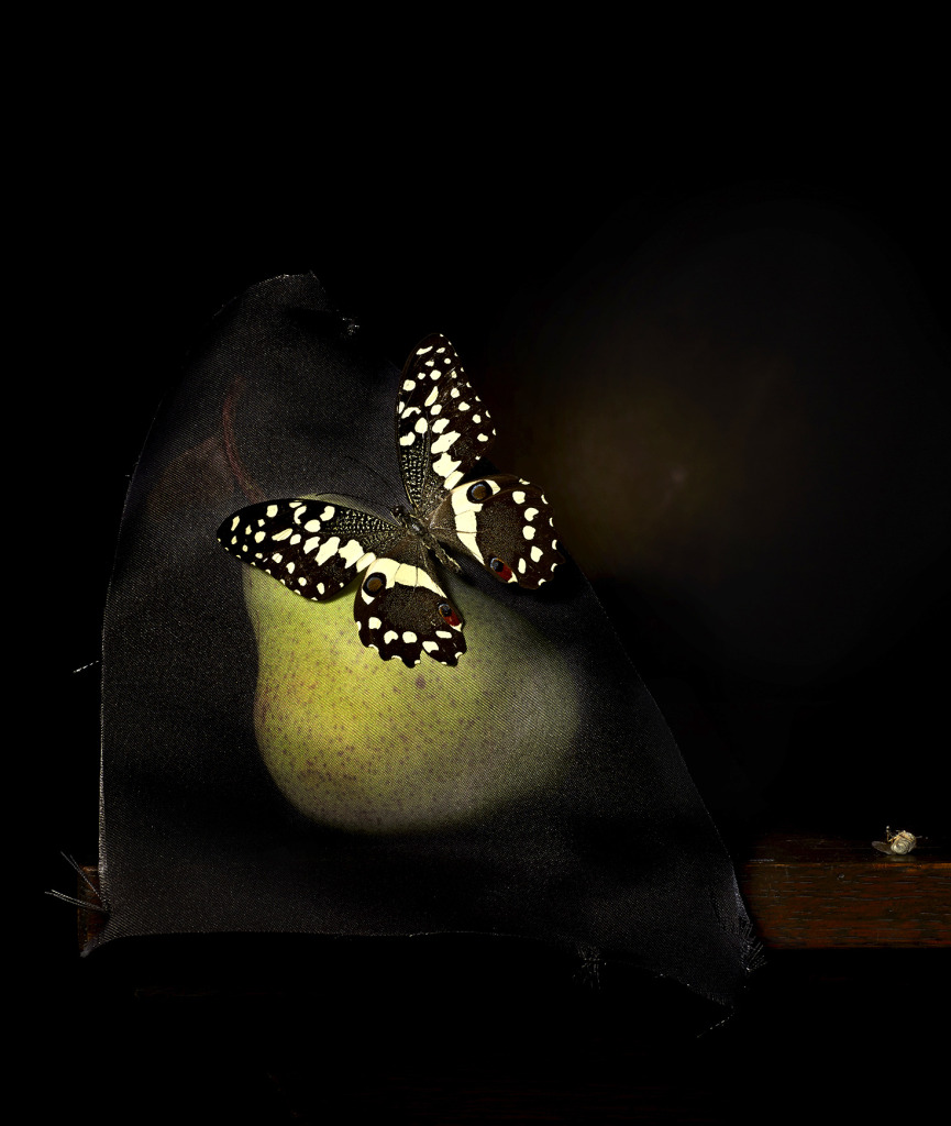 CJTaylor_Still life with pear and bush fly